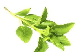 Травы для лечения бронхита в домашних условиях