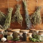 Какие травы помогают от кашля?
