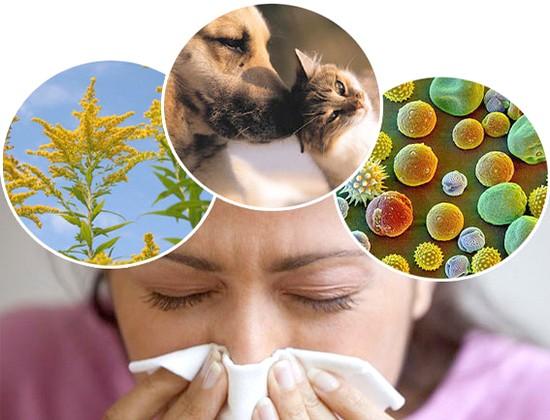 Причины ларингита аллергического