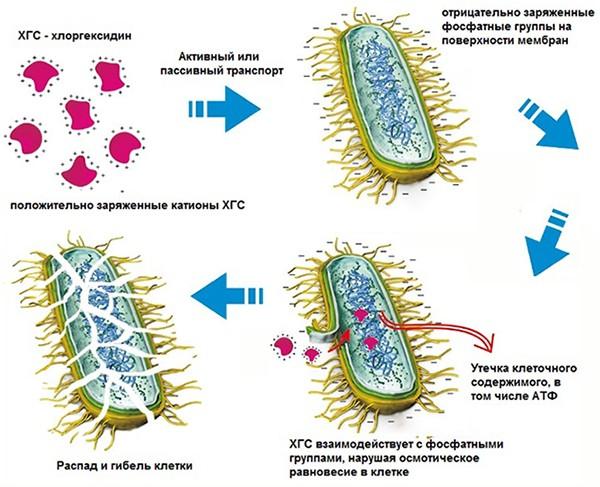 Хлоргексидин раствор инструкция по применению