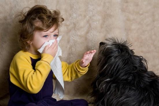 Частый контакт с аллергеном